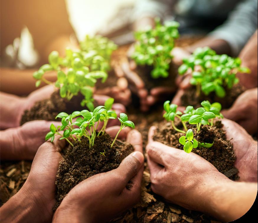 Foto di mani che tengono germogli di piante